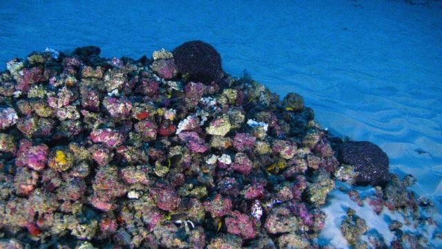 Amazon Reef